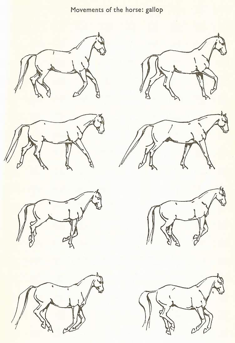gallop horse gaits diagram horse bridle diagram identify the horse