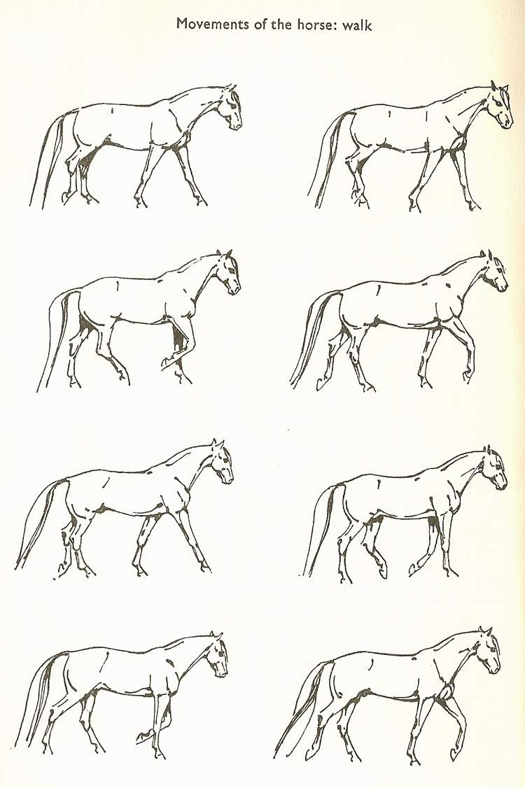 Identify the Horse